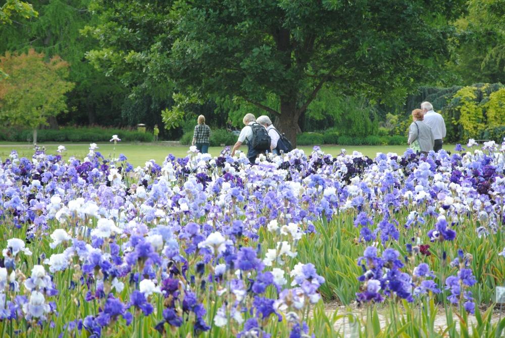 Parcs producteur d 39 iris route ph m re des iris for Piscine iris jardin